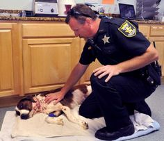 A dog viciously attacked by her owner will be adopted by the deputy who found her