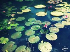 LiLy_Pads?? ^^