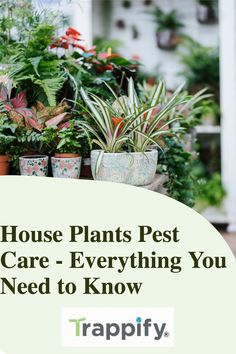 For many homeowners, pests can be an issue that plagues their homes, especially if you have houseplants. House plants pest care should be a priority when maintaining your collection. Indoor Vegetable Gardening, Organic Gardening Tips, Garden Soil, Plant Pests, Fertilizer For Plants, Hanging Plants, Indoor Plants, Household Plants, Plant Growth
