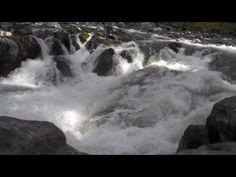 Fall Chinook at Rainie Falls, Rogue River