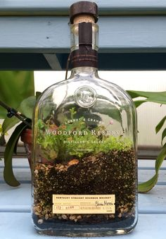 Love this creative DIY terrarium from an upcycled bourbon whiskey bottle! Assemble with dirt, plants + an empty bottle of your favorite booze. Bottle Terrarium, Bottle Garden, Garden Terrarium, Succulent Terrarium, Garden Plants, Terrarium Ideas, Indoor Garden, Indoor Plants, Outdoor Gardens