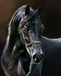 Big Black & Beautiful by *Roiuky on deviantART Beautiful Arabian Horses, Most Beautiful Horses, Animals Beautiful, Scratchboard Art, Horse Anatomy, Horse Wallpaper, Horse Artwork, Watercolor Horse, Horse Portrait