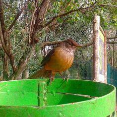 No Parcão, não há cachorros para virar lixo, mas passarinhos simpáticos como esse.