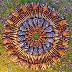Pine Cone Mandala. Could be done with pebbles, twigs, gumnuts, leaves etc