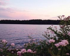 :) #lake #pale #pink #flowers #spring #nature #aesthetic #outdoor #amazing #photooftheday #instafollow
