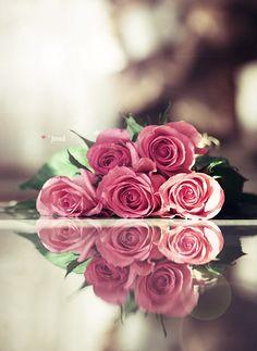 by Al-Joud on DeviantArt Beautiful Rose Photos, Beautiful Rose Flowers, Beautiful Flower Arrangements, Exotic Flowers, Love Rose Flower, Book Flowers, Flower Landscape, Rose Pictures, Flower Backgrounds
