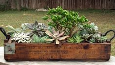 A custom miniature succulent arrangement in an old Viet Nam munitions box for the Bastrop Veterans' Association.  Love that it has handles, and want the tree in the middle for my miniature garden.