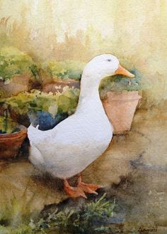 My favourite duck from up the road, called Quackers, Richard Lingard