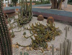 http://www.elhogarnatural.com/Cactaceas.htm