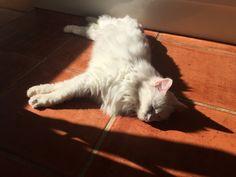 Kassie Cat | Pawshake