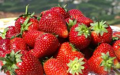 strawberry to download