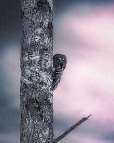 Wildlife Photographer Joachim Munter Powerful And Unusual Connection With Animals   #animal #animalphotography #fairytale #finland #forest #helsinki #joachimmunter #nature #photography #wildlife