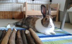 Yes I love my cleaned rug !! #welovebunnies Share your bunny stories with www.bunny-stories.com