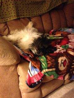 Sister Tweety, sound asleep.