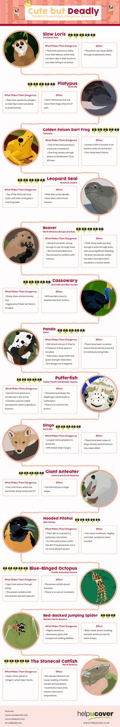 Cute but deadly  The most surprisingly dangerous animals  infographic    http   Pinterest