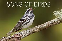 Fiz essa rádio no blog pra relaxar,só com sons de pássaros , 24 horas por dia direto....BOA NOITE SONG OF BIRDS http://www.blogouviragora.com/2018/01/song-of-birds.html
