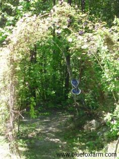Rustic Twig Archway Tunnel with Clematis