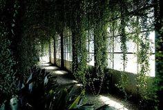 overgrown conservatory
