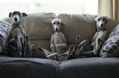 Whippet sofa