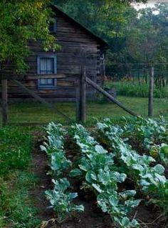 cabin and kitchen garden