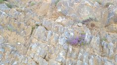 Ein Busch Thymian an einer Felswand.