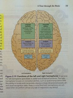 Basic functions of the brain's left and right hemispheres.