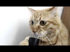▶ Кот и пылесос - YouTube