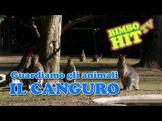 Guardiamo Gli Animali: Il Canguro - Bimbo Hit Tv