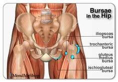 hip anatomy illiopsoas trochanteric bursae