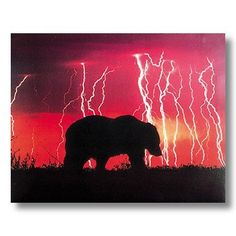 Bear in Lightning Storm