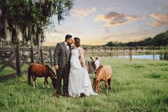Gorgeous blueberry farm with a stunning white barn and picture perfect backdrops. #EverAfterFarmsBlueberryBarn Click for more photos! #engaged #wedding #floridawedding #everafterfarms @marialongphotography1 Blueberry Wedding, Blueberry Farm, White Barn, Wedding Venues, Wedding Decor, Oak Tree, Outdoor Ceremony, Ever After, More Photos