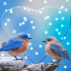Wisdom Quotes God's answers are wiser than our… Christian Quotes . Beautiful Soul, Beautiful Birds, Beautiful Pictures, Inspiring Pictures, Beautiful Things, Spiritual Inspiration, Daily Inspiration, Love Birds, Wisdom Quotes
