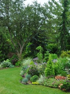 Three Dogs in a Garden: Garden Canadensis
