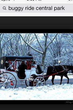 Carriage ride central park