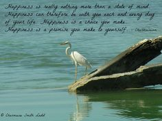 I took this one while anchored at Tarpon Belly Springs, in the FL Keys. Always loved sailing there from Boot Key Harbor, Marathon FL, and spending time watching the birds and dolphins. A magical place! Fl Keys, The Fl, Happiness Is A Choice, Shake Hands, Life Moments, Dolphins, Marathon, Sailing, Author