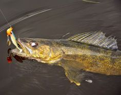 """The """"411 On Fishing"""" : Specialty Jigs for Pike and Walleye"""