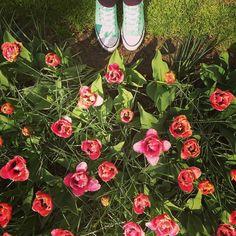 Adventures in #Keukenhof  #netherlands #travel #wanderlust #tulipseason by ashley_carrigan412