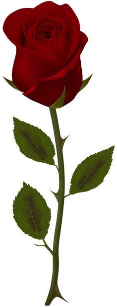 Dark Red Rose Transparent PNG Clip Art