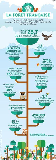 La forêt représente 30% du territoire de la France ! Infographie/état des lieux de la forêt à l'occasion des 50 ans le l'ONF_24 Février 2015