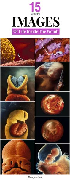 Lennart Nilsoon, a Swedish photographer has devoted twelve years of his life capturing images of foetus developing in the womb.
