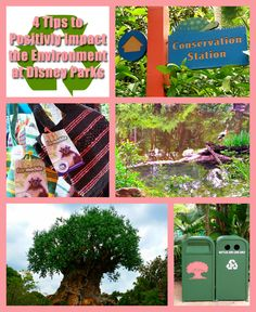 4 Tips to positively impact the environment while on vacation at a Disney parks!