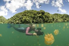 Plonger dans le lac aux Méduses, frisson des Îles Chelbacheb, aux Palaos (Pacifique).