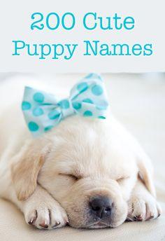 Cute puppy names - over 200 brilliant ideas