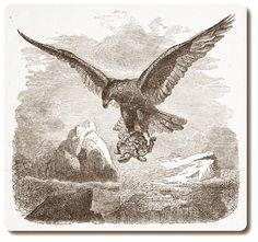 AdlerSchildkroete-300x282 Der Adler und die Schildkröte | Torheit