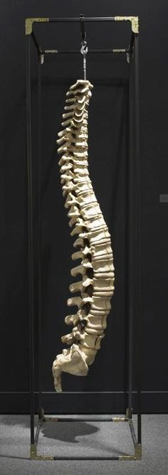 Spinal Cord sculpture that will blow your mind