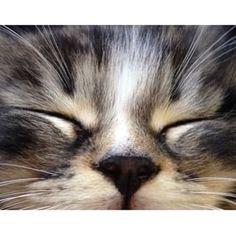 #kitten #nofilter #sleeping #black #nose #tiger #stripes #instapets #kittensfarm Tiger Stripes, Pets, Kittens, Photo And Video, Animals, Black, Instagram, Cute Kittens, Animales