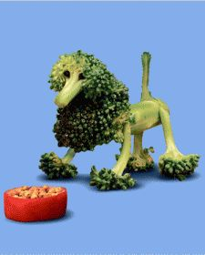who says broccoli looks like trees - its totally a poodle. . . how to motivate a child to eat their vegies
