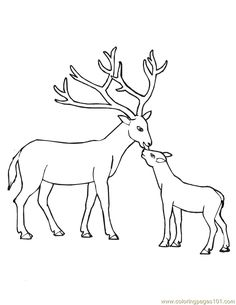 Deer Outline Coloring Pictures Deer Coloring Pages