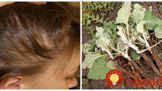 Zbohom vypadávanie vlasov: Tento lacný liek našich babičiekschová do vrecka aj predraženú kozmetiku z lekárne! Crochet Earrings, Homemade, Fit, Syrup, Home Made, Shape, Hand Made