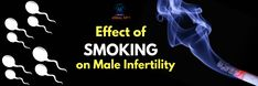 There are many factors that affect fertility rates but effects of cigarette smoking on male infertility is one of the leading factor for infertility in males. Smoking Cigarettes Effects, Smoking Effects, Infertility Clinic, Male Infertility, Factors, Smoke, Education, Onderwijs